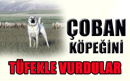 coban-kopegi