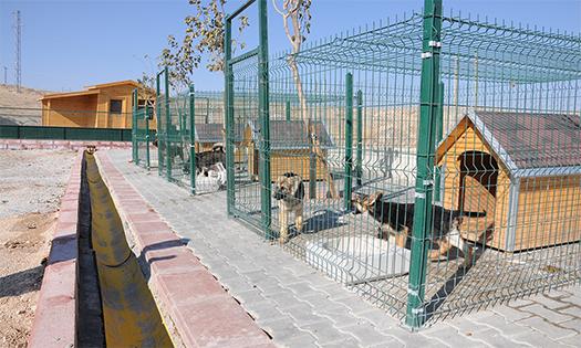 sokak-hayvanlari